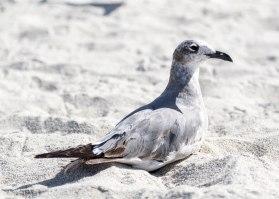 seagulls_10
