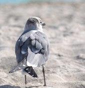 seagulls_11