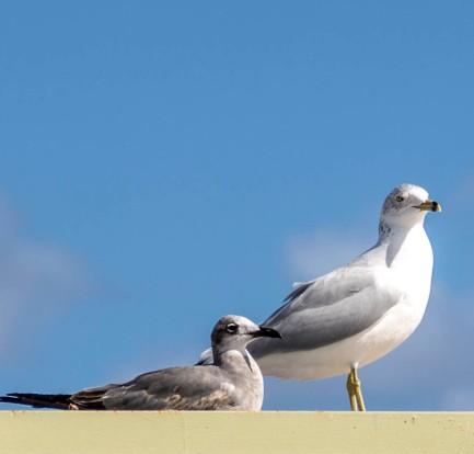 seagulls_8