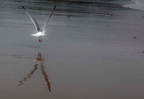 gulls_7