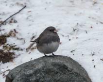 birds2_18
