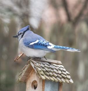 birds2_26