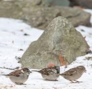 birds2_28