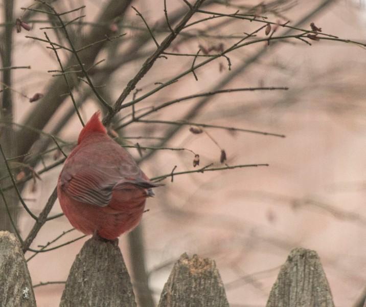 birds2_31