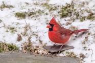 birds2_9