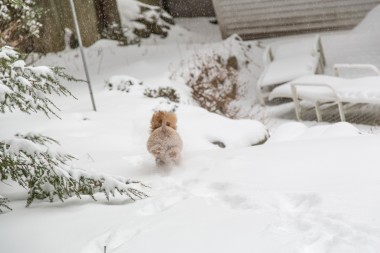 snowday_12