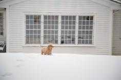 snowday_8