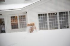snowday_9