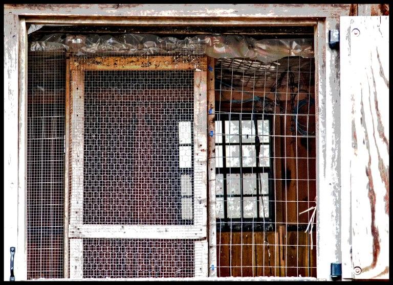 window2